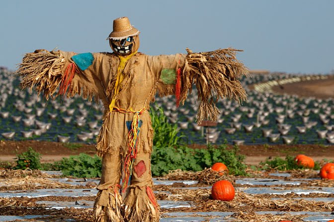 pumpkin_patch_south_orange_county_ca